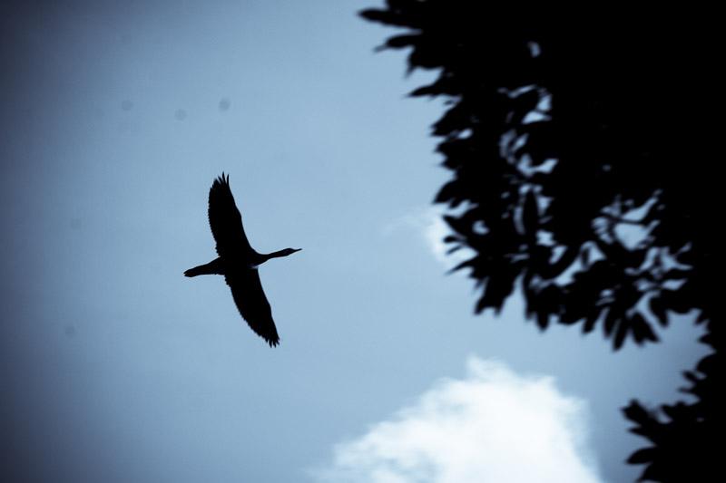 bird_399566492_o