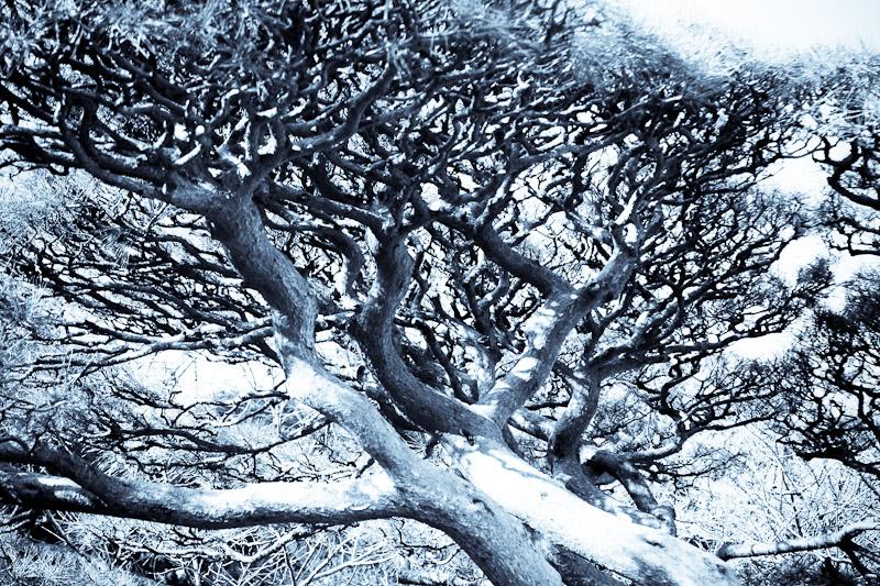 tree_398630909_o