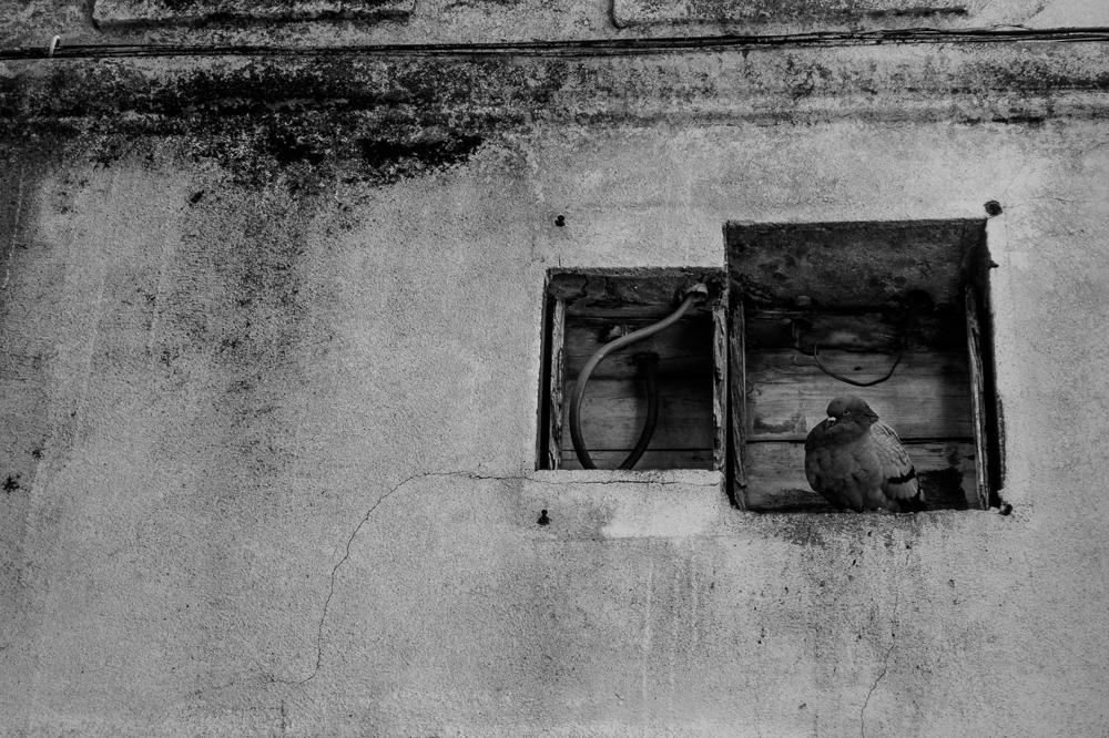 lisboa.noir-0265