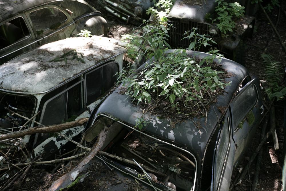 autofriedhof-kaufdorf-6542