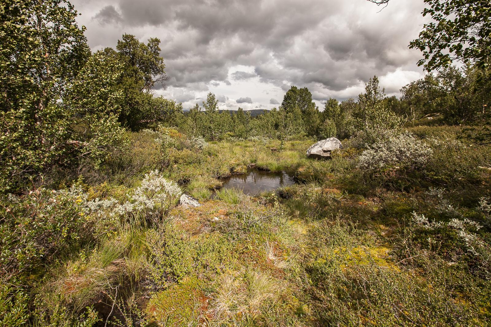 skandinavien_2010-1202